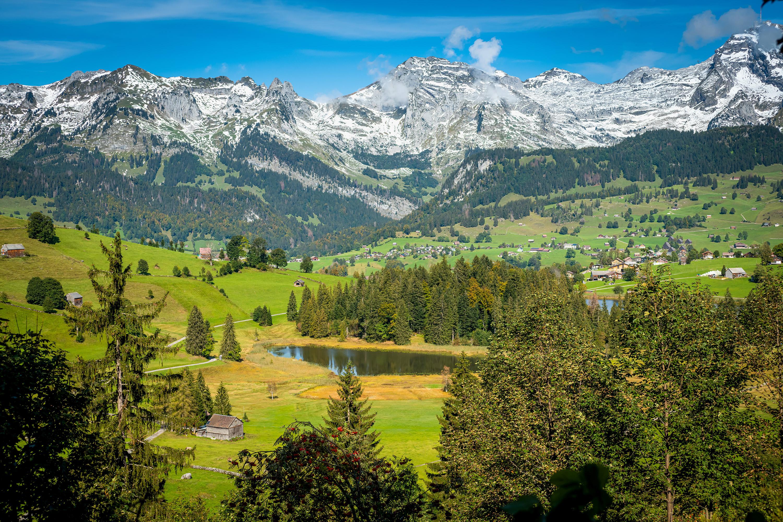 Alpenrose2
